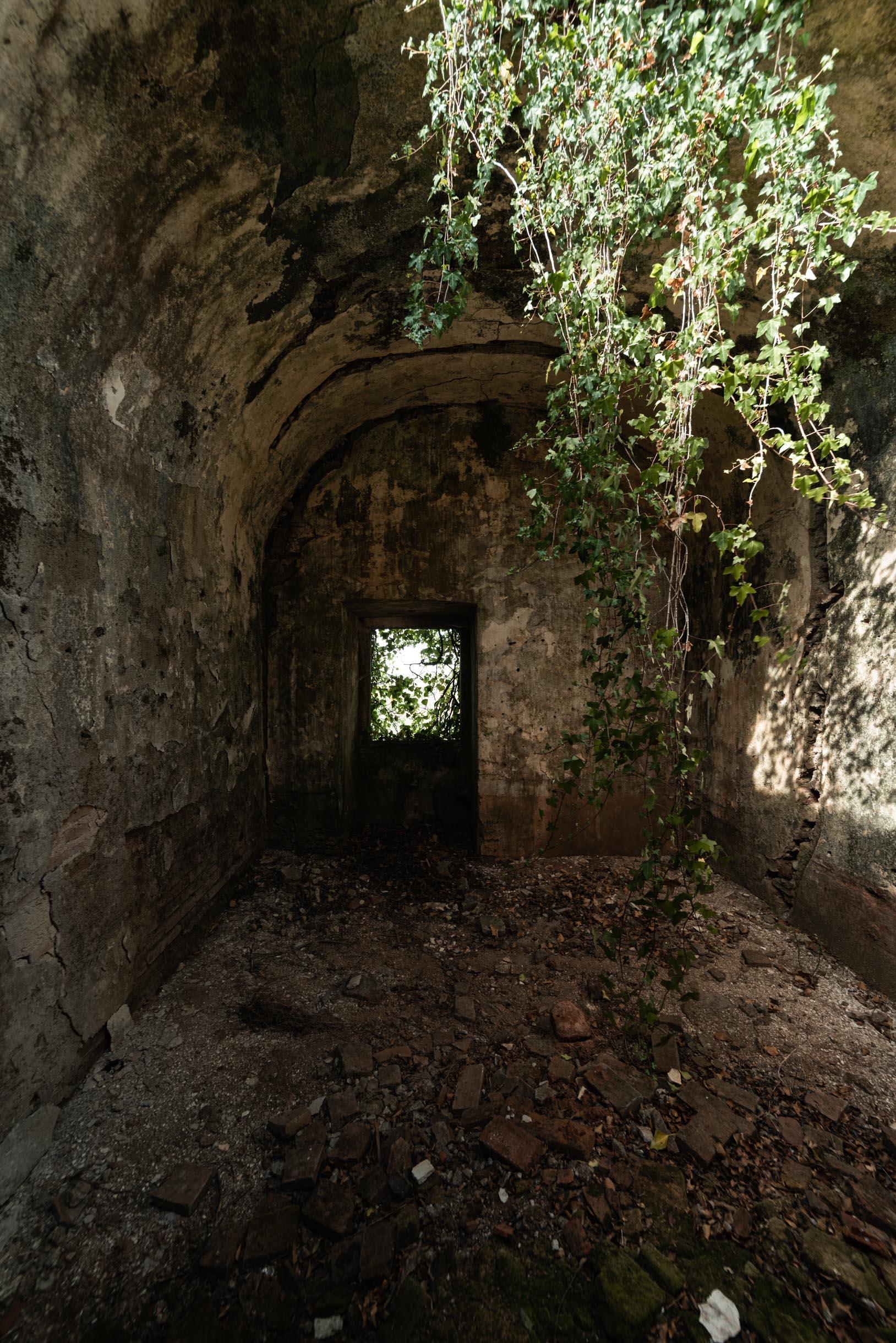 Selva Sagrada